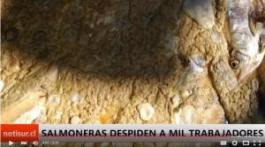 Abril Cesantes Mil Puerto Montt Salmoneras