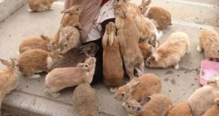 Conejos Huar1